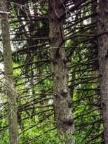 cedar (1 of 1)