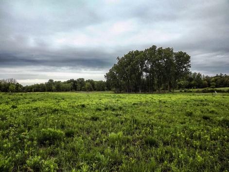 prairie_3 (1 of 1)_Snapseed