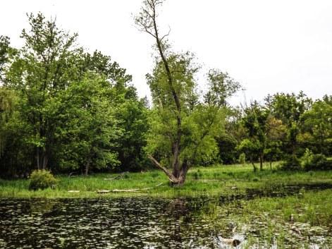 wetland2 (1 of 1)