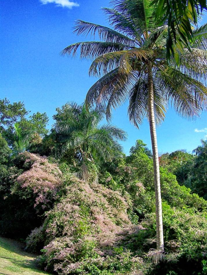 jardin_botanico1