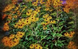 botanic_4