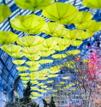 umbrellas3 (1 of 1)
