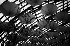 umbrellas4 (1 of 1)