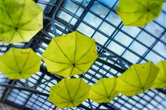 umbrellas6 (1 of 1)