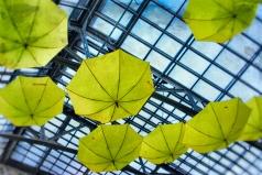 umbrellas6 (1 of 1)